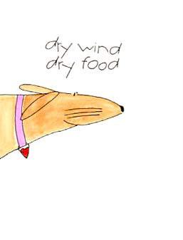 dry wind, dry food